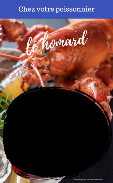 L'ardoisine 'Homard'